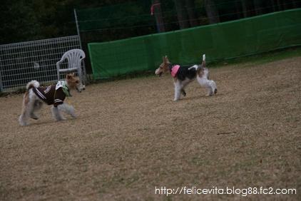 ②足柄DogRun