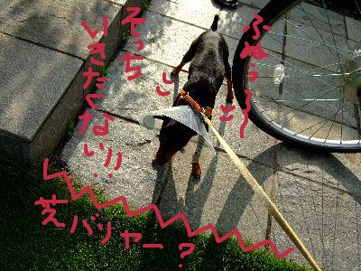 お散歩解禁2