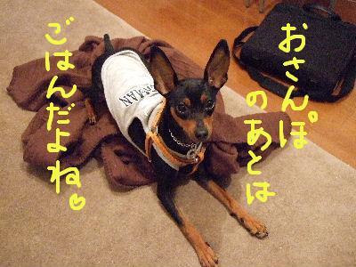 lAMS子犬用チキン2