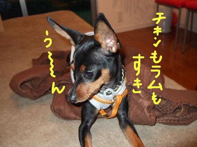 lAMS子犬用チキン3