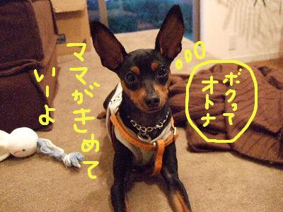 lAMS子犬用チキン4