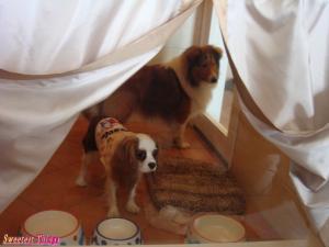 dog_room.jpg