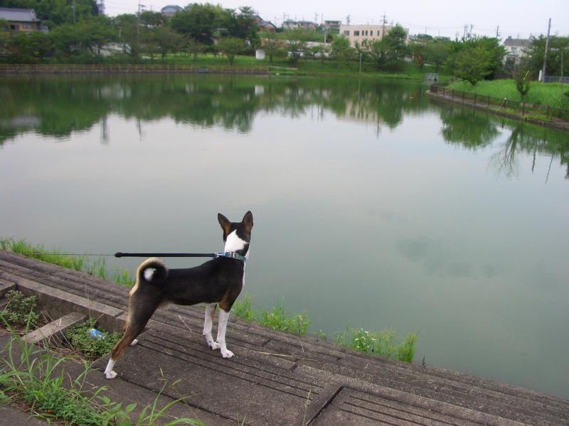 申ケ池(上池)