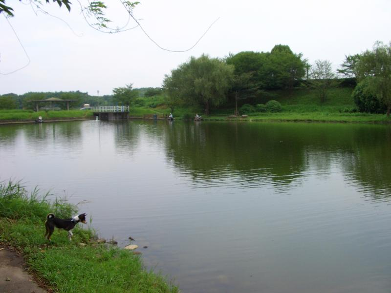 申ケ池(下池)