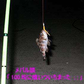 110202008005.jpg