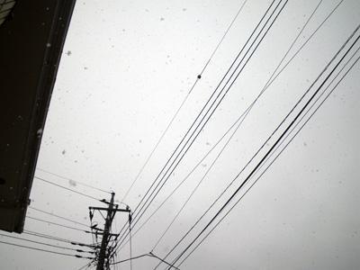 また雪だよ