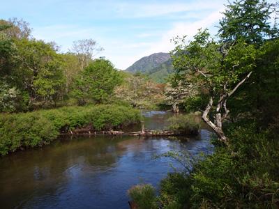 今日の湯川