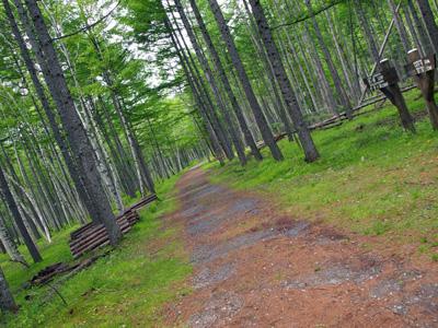西ノ湖への道
