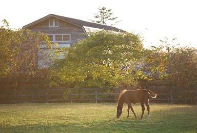 10・夕景・黄葉と仔馬