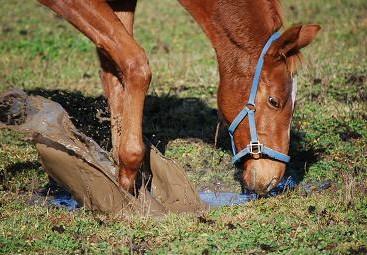 11・泥んこ・ダンス水溜り