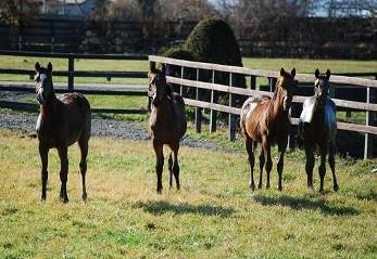 11・泥んこ・4頭・光る馬たち
