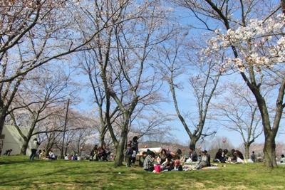 桜まつり開催