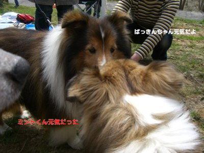 ミントくん&ぱっきん LOVE