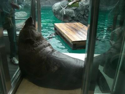 旅行 鳥羽水族館 その4