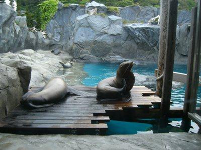 旅行 鳥羽水族館 その2