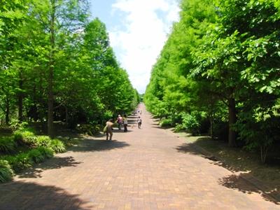 ばら園 並木道