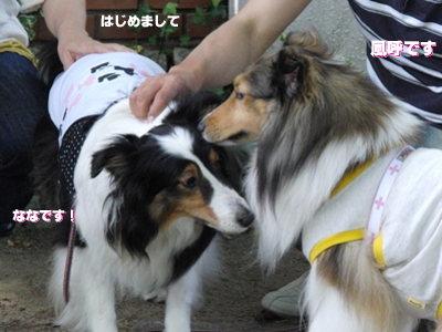BBQオフ会 ななちゃん&風呼ちゃん