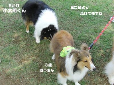 BBQオフ会 ぱっきん&小太朗くん その2