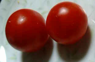 たえちゃんトマト(収穫)090715