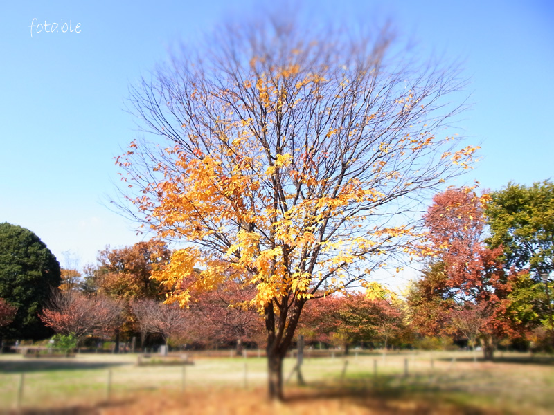 photo20101127_2.jpg