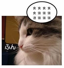 猫の脳内メーカー