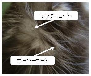 猫のコート