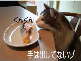 猫噺1-3