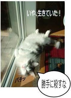 猫8-10