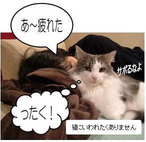 猫8-11
