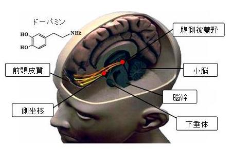 ドーパミン神経