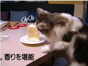 猫10-3