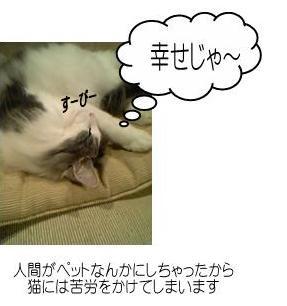 猫-幸せじゃ~