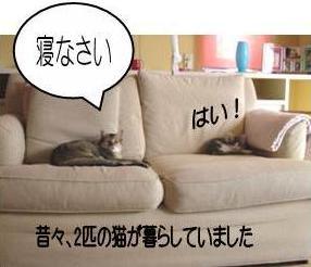 猫11-2