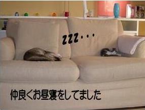 猫11-3