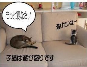 猫11-4