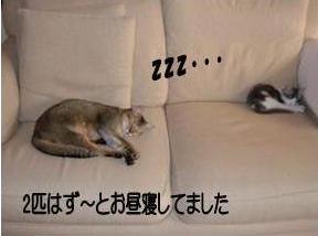 猫11-5