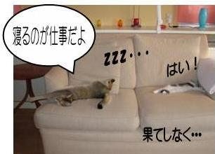 猫11-6