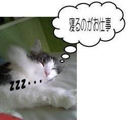猫11-7