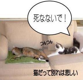 猫12-2