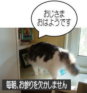 猫12-4