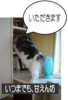 猫12-5