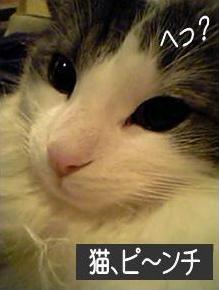 猫13-1