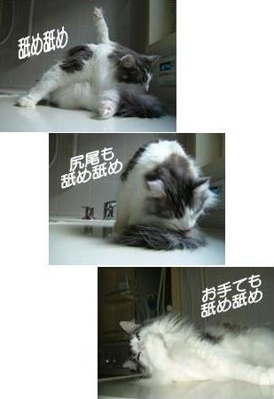 猫13-3