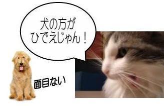 猫13-7
