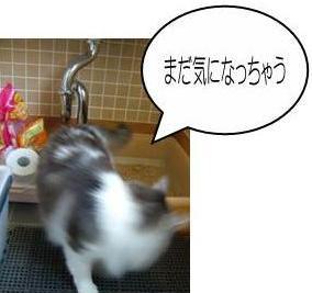 猫14-3