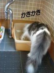 猫14-4