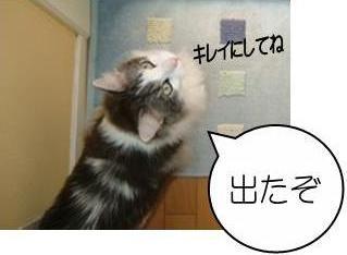 猫14-5