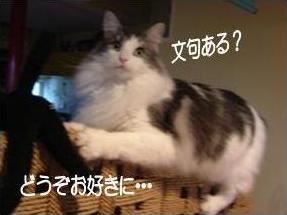 猫16-6