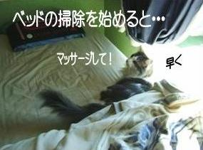 猫18-2