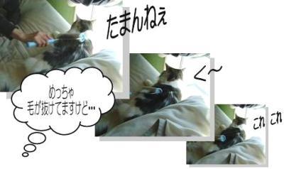 猫18-3